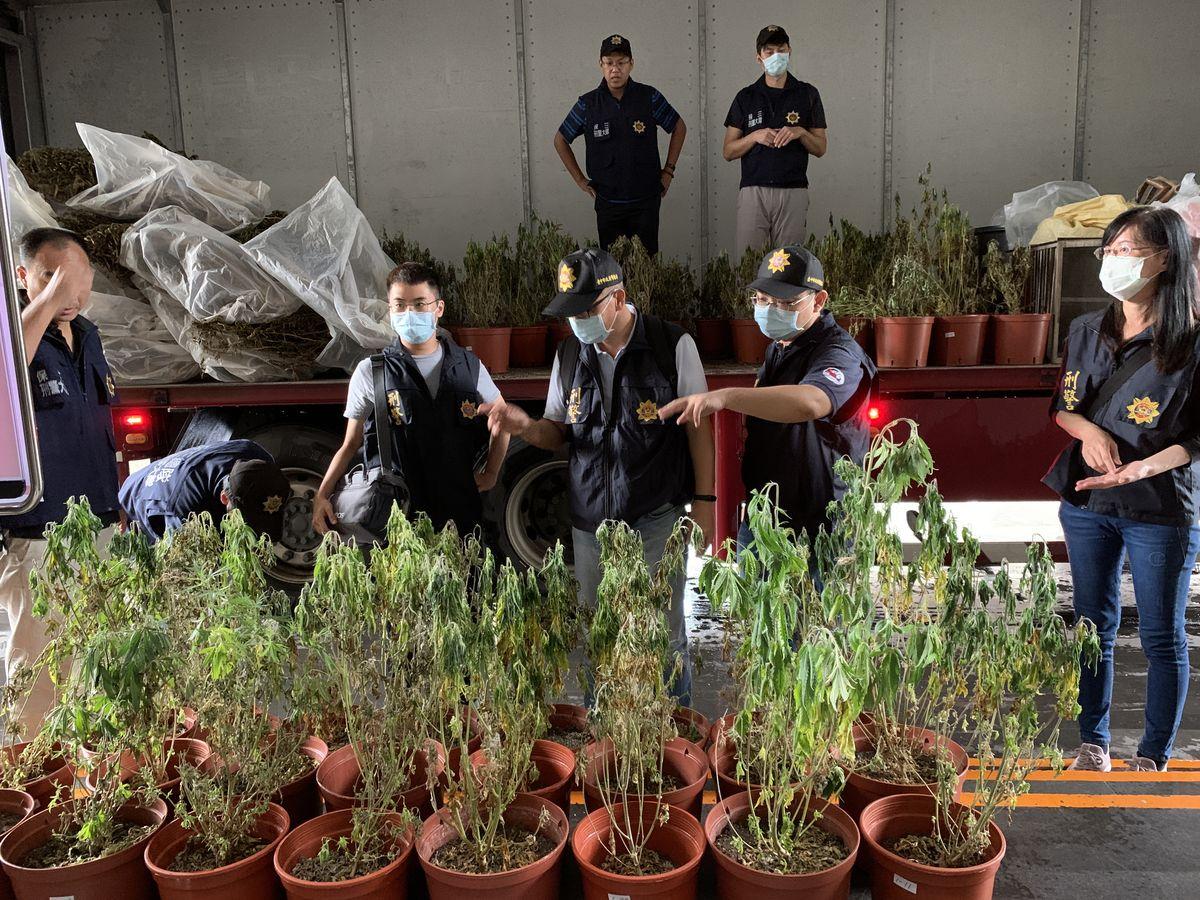 檢警查獲「史上最大大麻自耕農」 毒品市值超過6億元