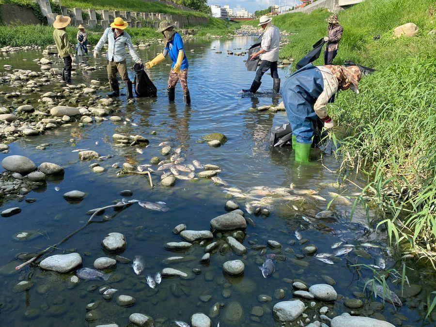 台中河川死魚事件頻傳 環保局加裝30台水盒子即時監控
