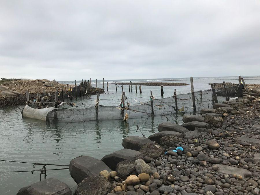 鰻魚苗季節到! 中市府持續受理鰻魚捕撈範圍申請