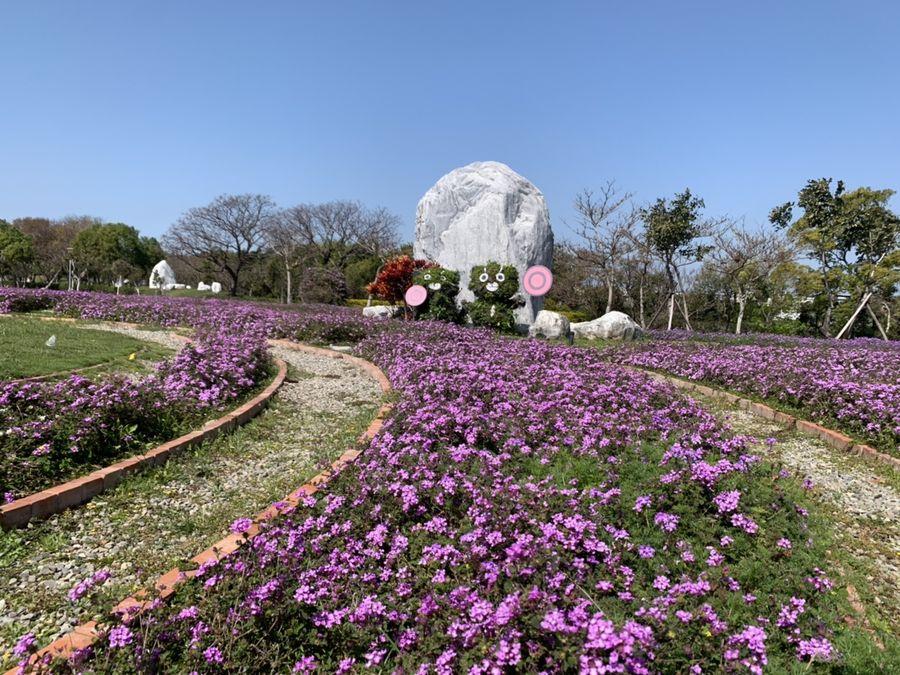 初春最浪漫!后里環保公園波斯菊、馬櫻丹雙色花海綻放