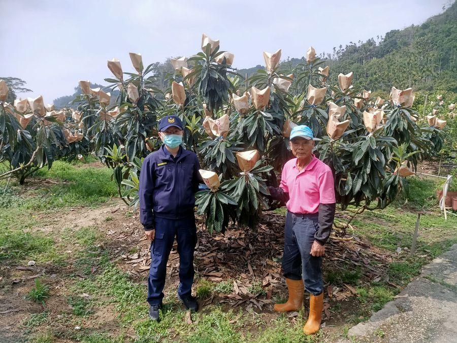 太平枇杷季甜蜜展開  警方護農專案保安心